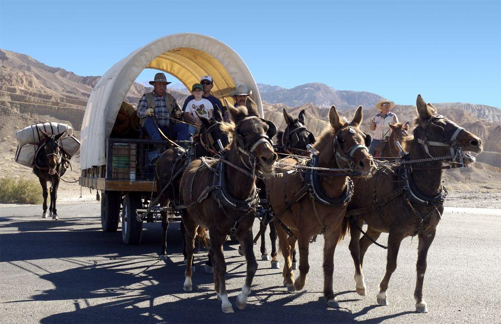 Mules pulling wagon