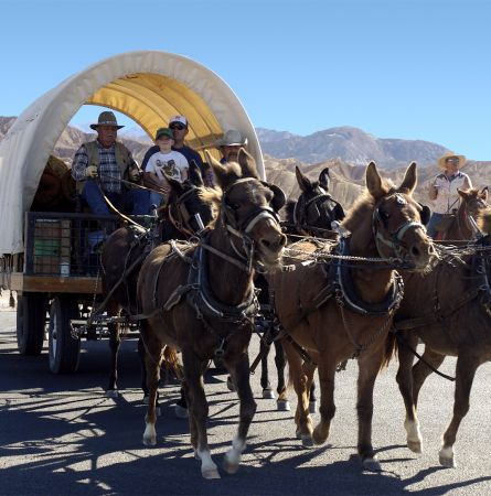 Mules and Borax: A Death Valley Legacy