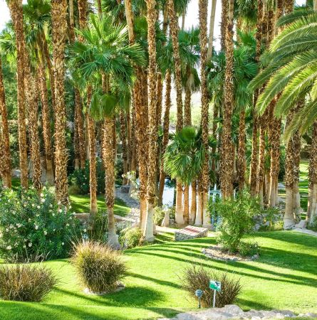 Palms garden at Oasis
